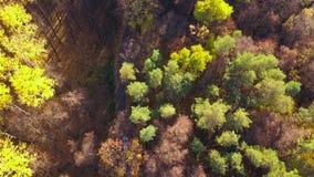 在驾车的鸟瞰图通过秋天森林公路 风景秋天的横向 影视素材