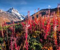 在高加索山脉的五颜六色的秋天早晨 库存照片