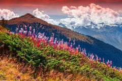 在高加索山脉的五颜六色的秋天早晨 免版税图库摄影