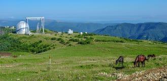 在高加索山脉的望远镜 在吃草草的前景马 免版税库存照片
