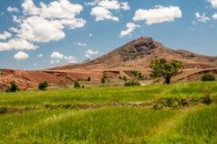 在高原中心的马达加斯加人的小山 免版税库存图片