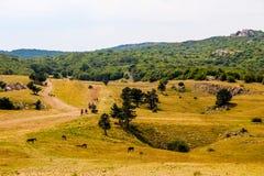 在高原的谷 免版税库存图片