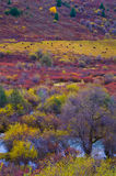 在高原的colorized牧场 库存图片