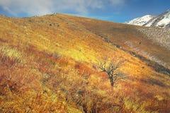 在高地的一棵树在晚秋天染黄了干草原 库存照片