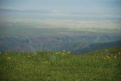 在高地的野花 库存照片