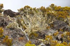 在高处的火山的植被 免版税库存图片