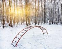 在高大的树木中的操场在雪下 梯子盖与 免版税图库摄影