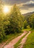 在高大的树木中的森林公路与绿色叶子 库存图片