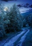 在高大的树木中的森林公路与绿色叶子 免版税库存图片