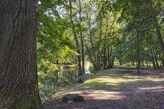 在高大的树木中的森林河 免版税库存照片