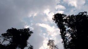 在高大的树木的云彩 股票录像