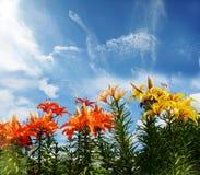 在高天空背景的百合与一朵花梢云彩的喜欢双 免版税库存照片
