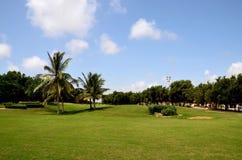 在高尔夫球和乡村俱乐部卡拉奇巴基斯坦的被修剪的草和棕榈树 免版税图库摄影