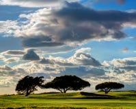 在高尔夫球场的三棵树 免版税库存照片