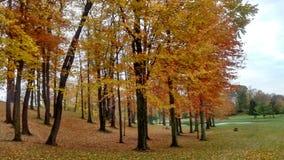 在高尔夫球场的秋天场面 库存图片