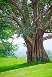 在高尔夫球场的结构树 库存照片