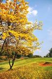 在高尔夫球场的黄色花 免版税图库摄影