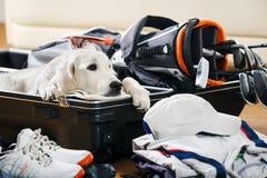 在高尔夫球的没有狗 库存照片