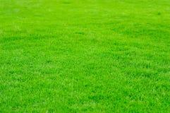 在高尔夫球的绿草被归档的 免版税库存照片