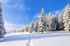 在高山中的一冷淡的美好的天是用白色蓬松雪盖的不可思议的树反对冬天风景 免版税库存照片
