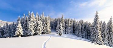 在高山和峰顶中的一冷淡的美好的天是用白色蓬松雪盖的不可思议的树 免版税库存图片