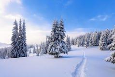 在高山和峰顶中的一冷淡的美好的天是用白色蓬松雪盖的不可思议的树 免版税图库摄影