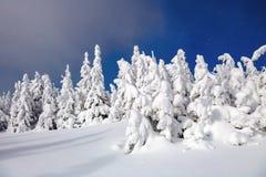 在高山和峰顶中的一冷淡的美好的天是用白色蓬松雪盖的不可思议的树 33c 1月横向俄国温度ural冬天 图库摄影