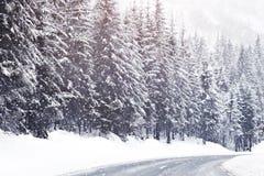 在高山山的美丽的积雪的冷杉木 免版税库存照片