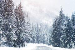 在高山山的美丽的积雪的冷杉木 免版税库存图片