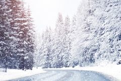 在高山山的美丽的积雪的冷杉木 图库摄影