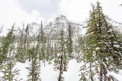 在高山山腰的树 图库摄影