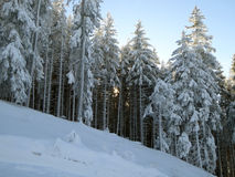 在高山森林之外的日落 库存照片