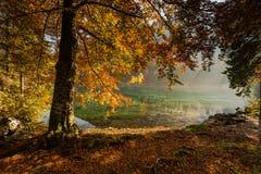 在高山湖和森林的秋天充满活力的颜色 免版税库存照片