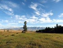 在高山的偏僻的树反对天空 免版税库存照片