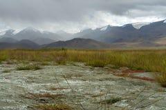 在高山的秋天:被染黄的草,灰色Hoebts上面盖与使模糊并且覆盖 免版税库存图片