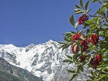 在高山的莓果夏天 库存图片