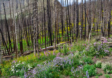 在高山花中地毯的森林再生  免版税图库摄影