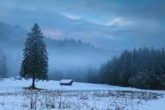 在高山草甸的冬天有雾的早晨 免版税库存照片