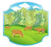 在高山草甸的母牛 山脉和绿色山谷 标签的背景 免版税库存图片