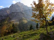 在高山风景的槭树在秋天的晴天 库存图片