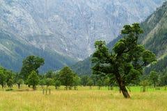 在高山风景的风景谷Ahornboden 库存图片