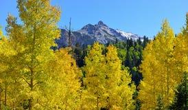 在高山风景的黄色白杨木在叶子季节期间 免版税库存照片