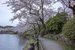 在高松附近的樱桃树在高松公园,盛冈,岩手, Tohoku,日本在春天筑成池塘 选择聚焦 库存照片