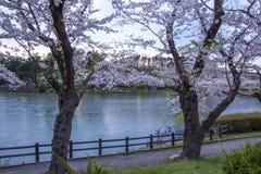 在高松附近的樱桃树在高松公园,盛冈,岩手, Tohoku,日本在春天筑成池塘 选择聚焦 库存图片