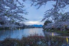 在高松附近的樱桃树在高松公园,盛冈,岩手, Tohoku,日本在春天筑成池塘 选择聚焦 免版税库存图片