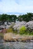在高松附近的樱桃树在高松公园,盛冈,岩手, Tohoku,日本在春天筑成池塘 选择聚焦 免版税图库摄影