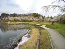 在高松附近的樱桃树在高松公园,盛冈,岩手, Tohoku,日本在春天筑成池塘 选择聚焦 免版税库存照片