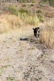 在高涨的愉快的狗 免版税库存图片