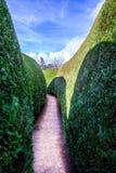在高绿色墙壁之间的长的空的走道 库存图片