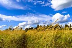 在高草中的小径在与白色clou的蓝天下 免版税库存图片